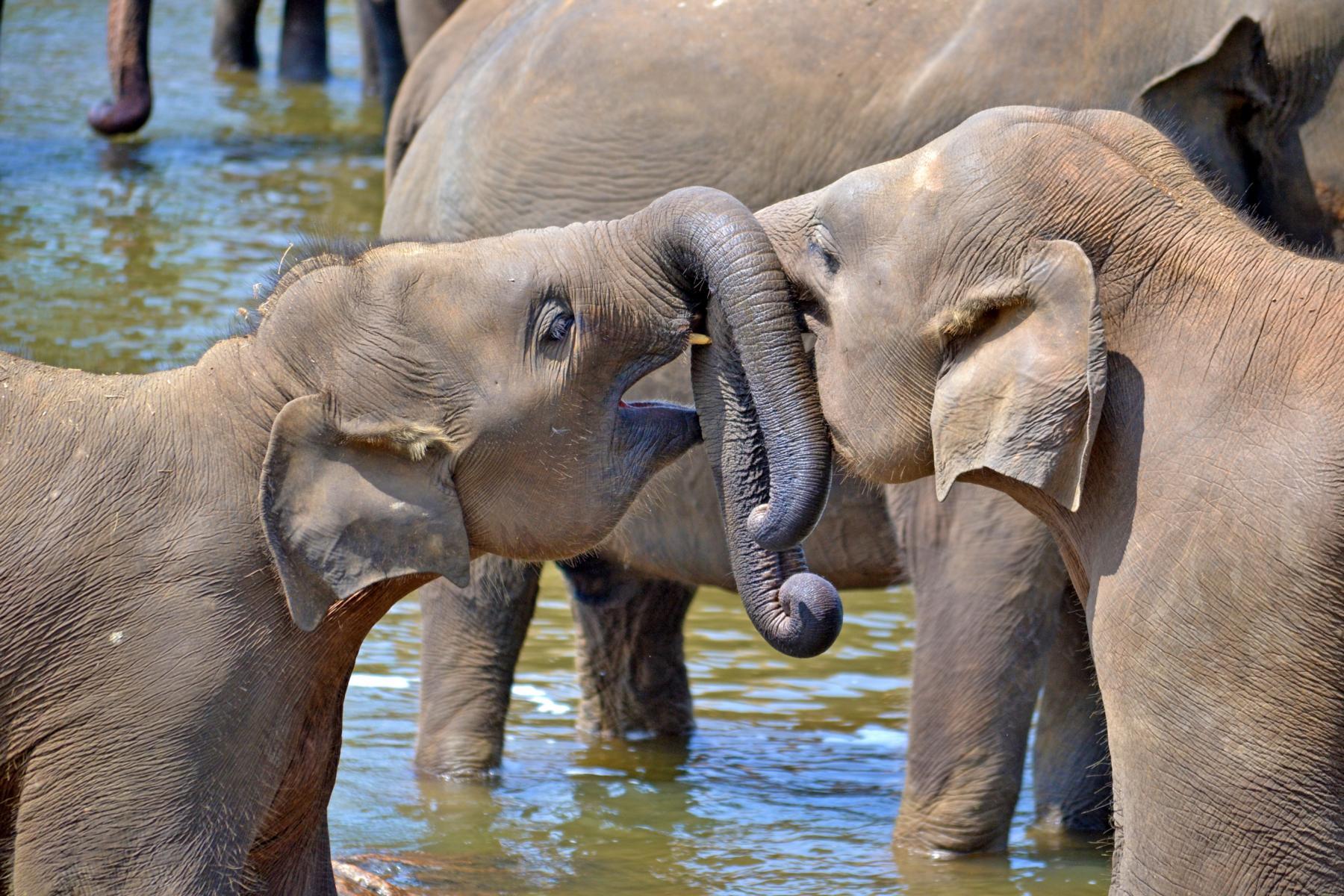 young-elephants-264711